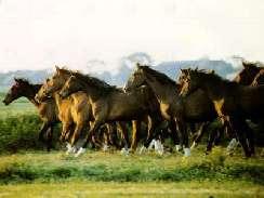 lovas 7 képek