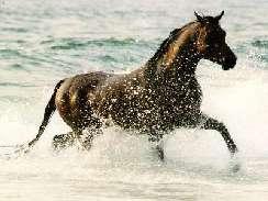 lovas 10 képek