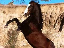 lovas 11 képek