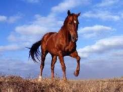 lovas 16 képek
