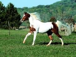 lovas 17 képek