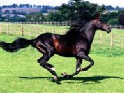 lovas 23 képek