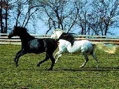 lovas 27 játékok