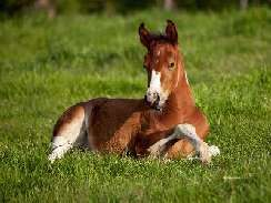 lovas 29 képek