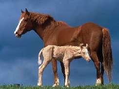 lovas 31 képek