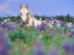 lovas 34 képek