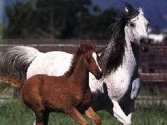 lovas 41 képek