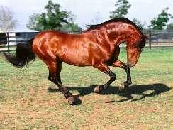 lovas 44 képek